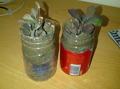 fare una pianta dalla talea