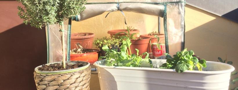 urban gardening agenda degli appunti