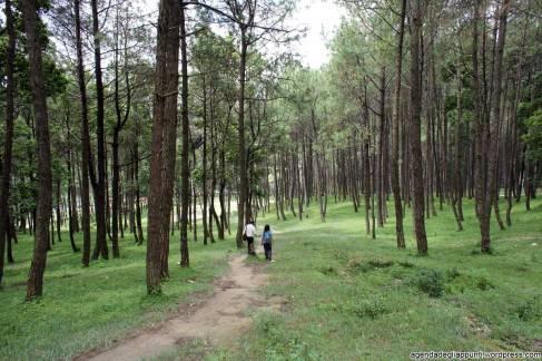 sette giorni in nepal escursione a piedi attraverso i boschi di changu naraya cose da vedere nella valle di kathmandu