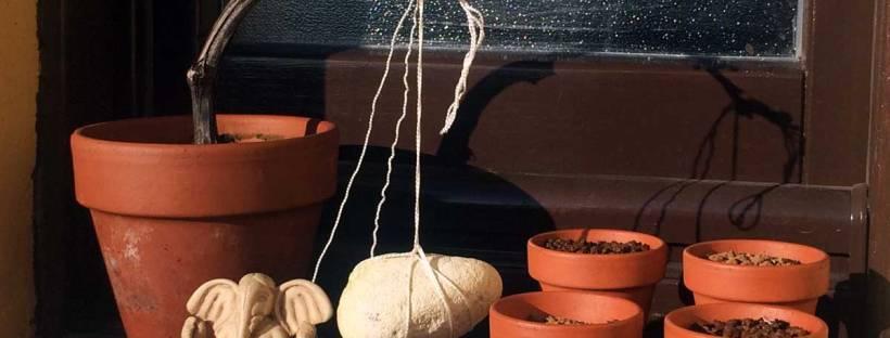 talea di moscato bonsai a cascata e semi di larice