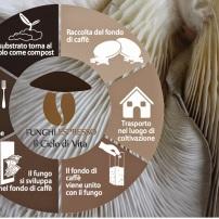 Funghi Espresso il progetto toscano che coltiva funghi partendo dai fondi di caffè dei bar economia circolare