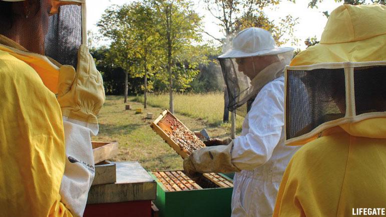 un apicoltore controlla gli alveari che ospitano le api del progetto bee my future di lifegate