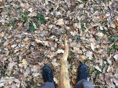 Un vecchio bastone ed un paio di scarponcini Salomon nuovi da provare i protagonisti della mia camminata al Casale d'Antoni