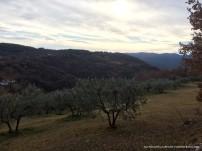 Ulivi al calar del sole sulle colline di santa rufina in provincia di rieti
