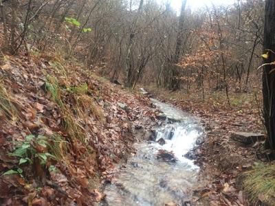 sentiero monte morto campo dei fiori di varese mountain bike freeride avventura parco