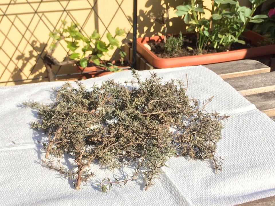 erbe officinali timo e moscato da uva su balcone in fiore a milano