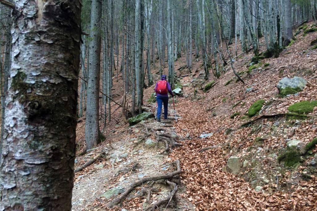 immersi in uno stupendo bosco di conifere ed alberi al alto fusto