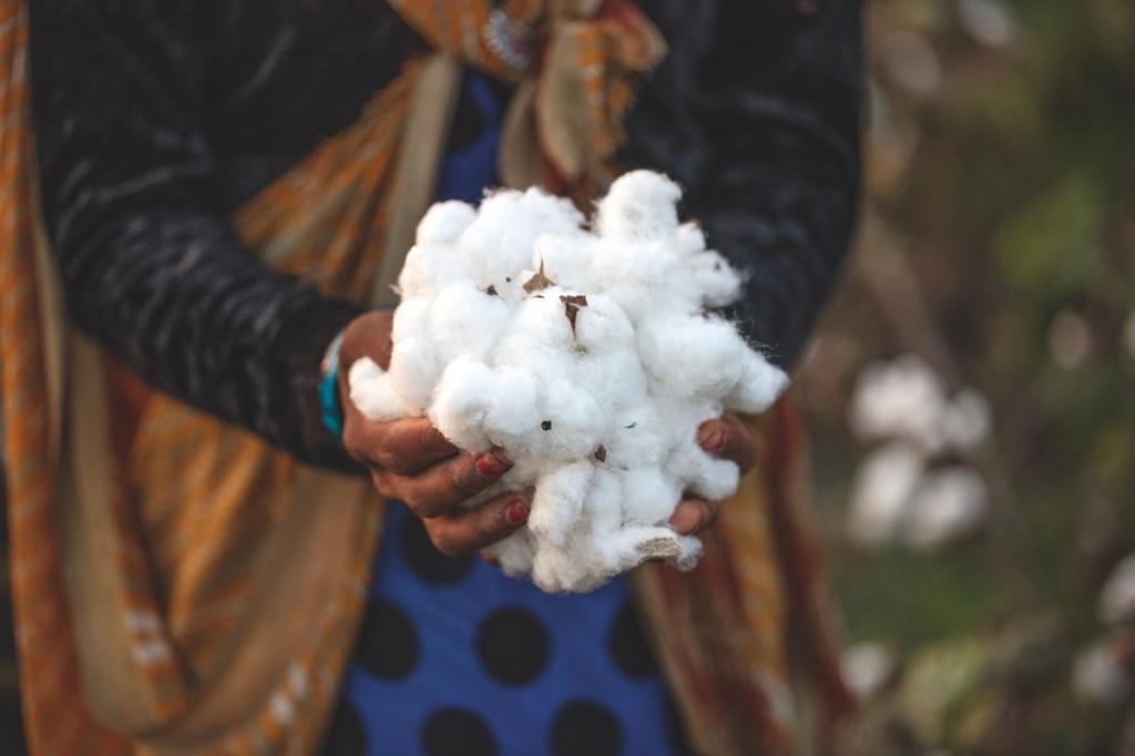 una donna tiene tra le mani cotone appena raccolto e proveniente da agricoltura rigenerata in India