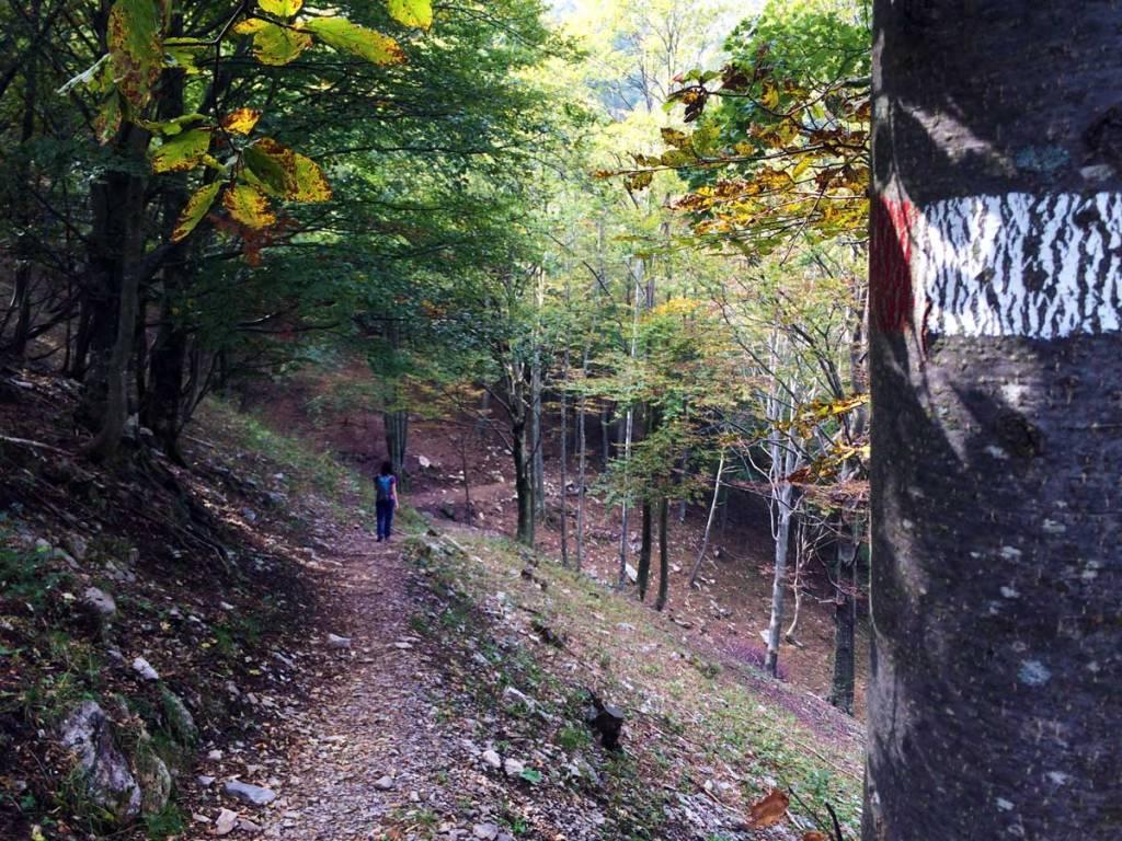 sentiero di montagna all'ombra di una faggeta sulla Grigna Meridionale