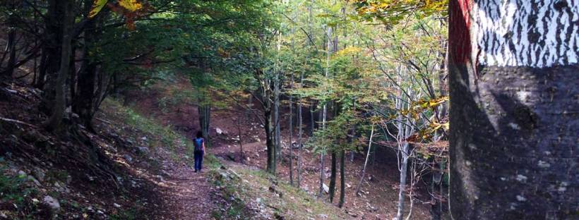 sentiero di montagna all'ombra di una faggetta sulla grigna meridionale