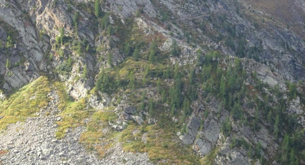 un sentiero militare di montagna tra i larici