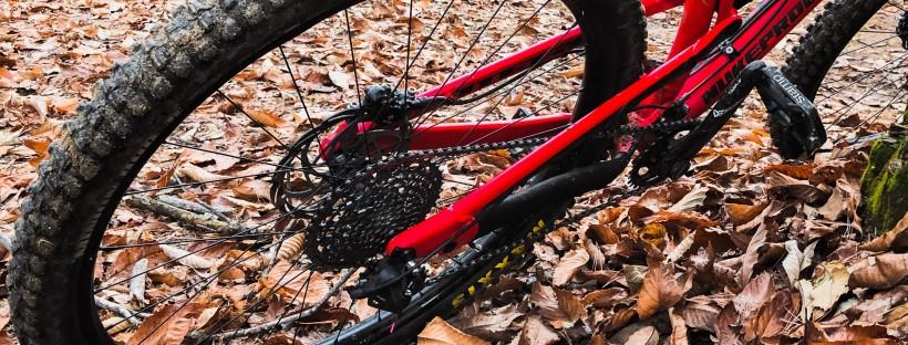 la ruota posteriore di una mountain bike, foglie secche ed il sole tra gli alberi