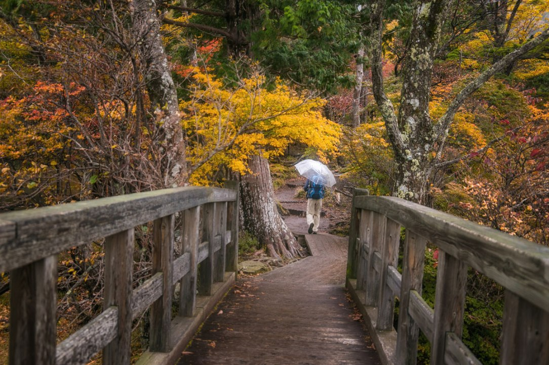 una persona sullo sfondo cammina nel bosco per rilassarsi