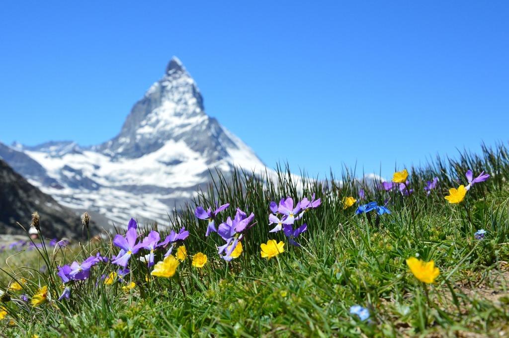 Fiori in primo piano, sullo sfondo il monte Cervino