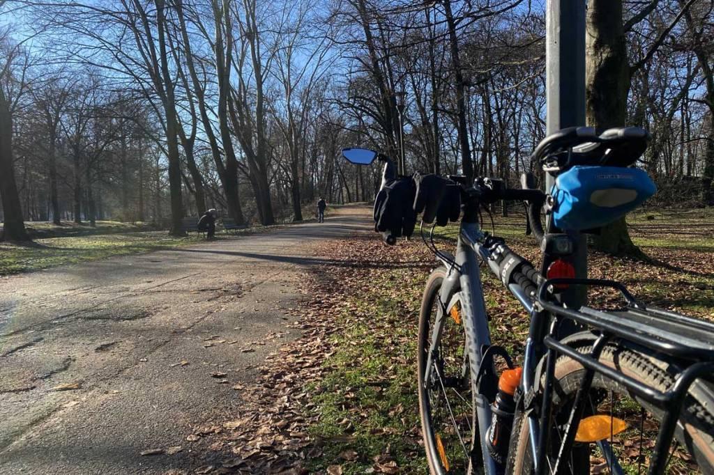 una bicicletta e una strada asfaltata tra gli alberi all'interno di un parco