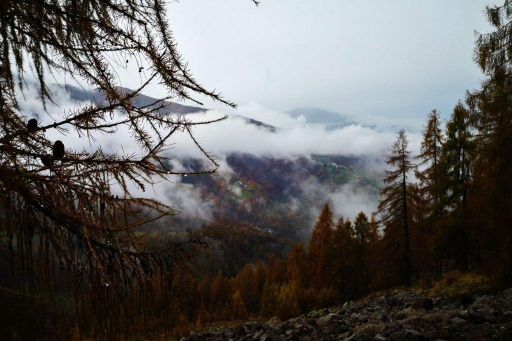 in primo piano un ramo di larice rosso bagnato dalla pioggia e sullo sfondo una vallata avvolta dalle nuvole in autunno