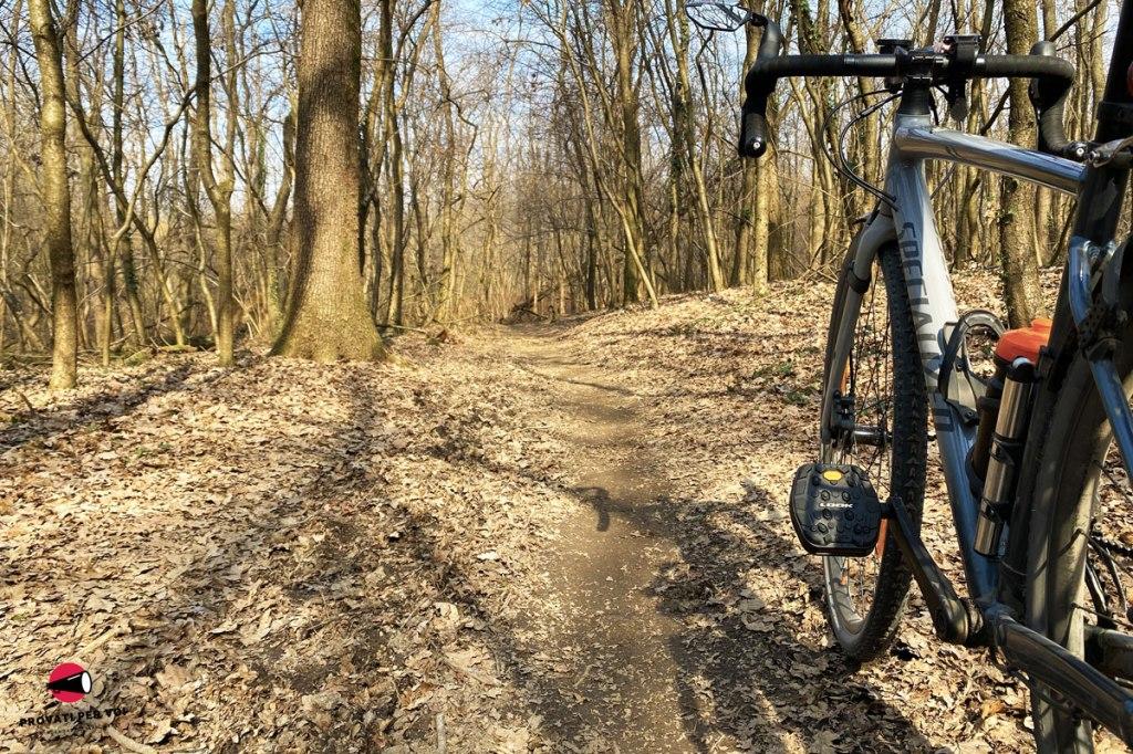 bicicletta gravel bike nel bosco invernale
